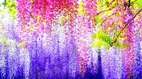 Most Colorful Wallpaper Ever | most beautiful colorful flowers wallpaper nature