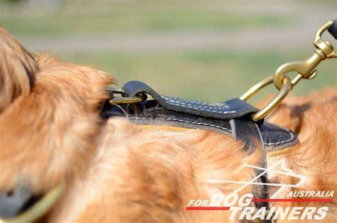 golden retriever harness buy designer padded leather harness walking gear