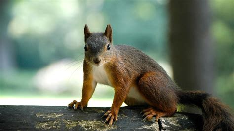 squirrels mimic bird alarms to foil the enemy npr