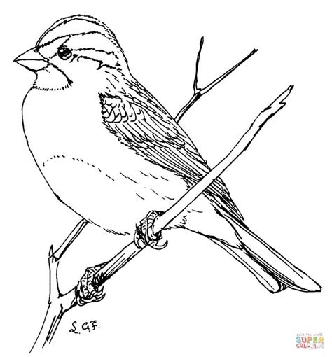 coloring page of house sparrow white throated sparrow coloring page free printable