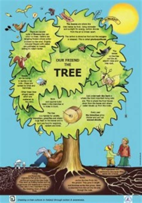 top 10 pictures of trees for day national tree day seomra ranga