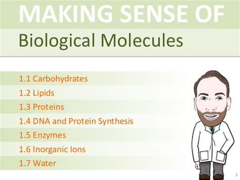 carbohydrates a level a level biology biological molecules