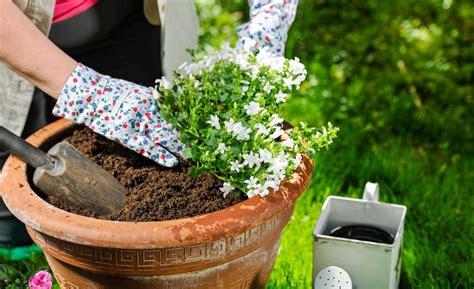 vasi piante come scegliere i vasi per piante officina verde verona