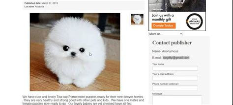 puppy scams truebuy au puppies for sale scams