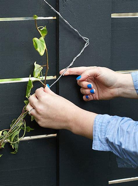 el enrejado in english c 243 mo hacer un elegante y sencillo enrejado de plantas
