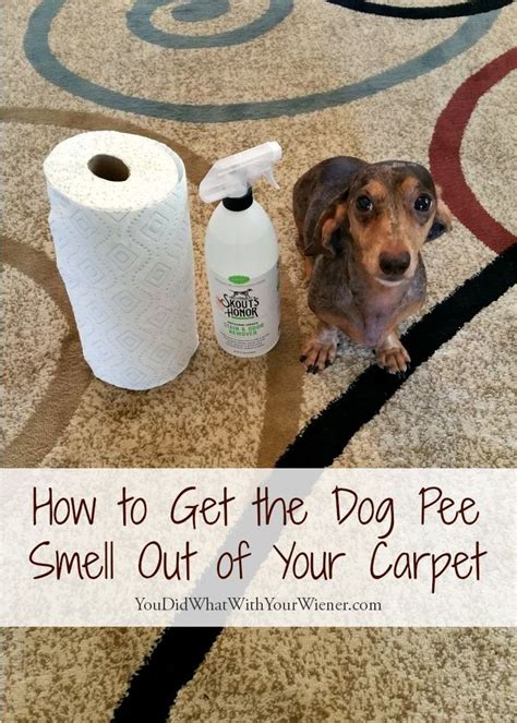 dog pee ideas  pinterest cleaning dog pee