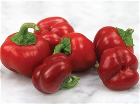 Mini Bell Tomato Seed mini bell pepper baker creek heirloom seeds