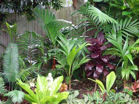 tropical plants brisbane 119 best images about garden on agaves garden