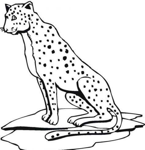 Jaguar Coloring Pages For Kids Coloring Home Coloring Pages Jaguar