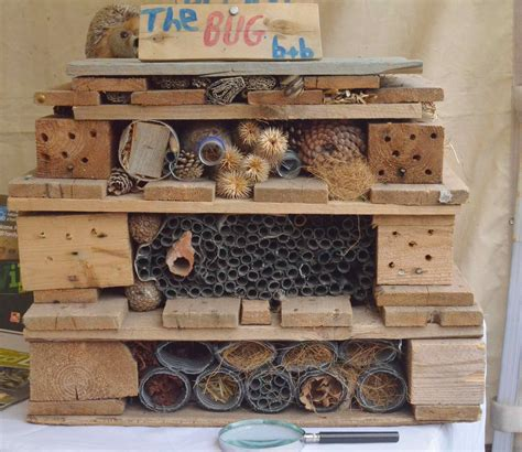 gaylord palms orlando bed bugs making a bug hotel image vh 36 caracal photos bhaag