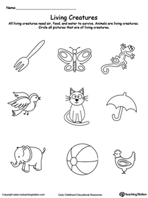 beach coloring pages your personal guide to marthas vineyard animal and plant sorting myteachingstation com