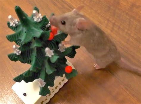 your daily dose of cute mouse decorates christmas tree