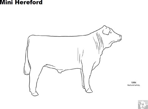 hereford cow coloring page breed coloring pages mini hereford
