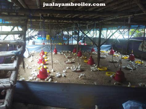 Jual Bibit Ayam Broiler Tangerang jual ayam broiler di tangerang jual ayam broiler