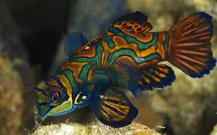 pictures of colorful fish wallpaper 36911