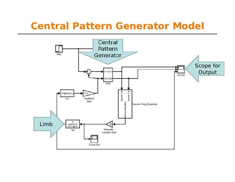 central pattern generator human locomotion learn matlab for ease lec5