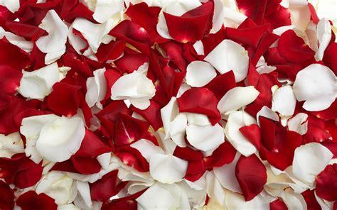 petali di fiore petali di rosa significato fiori