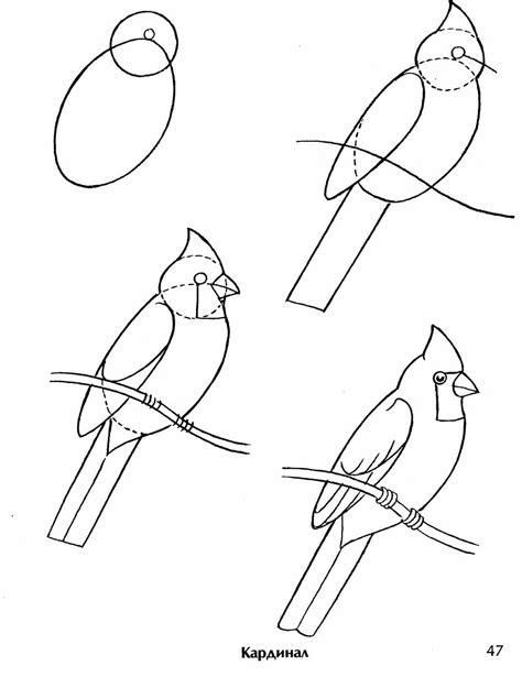 как раскрасить птиц видео