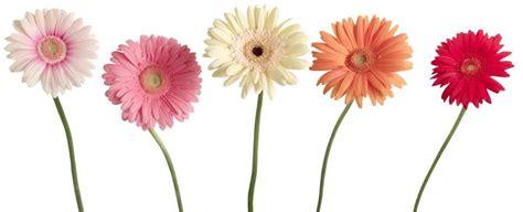 Wholesale Florist by Binienda Wholesale Florist Home