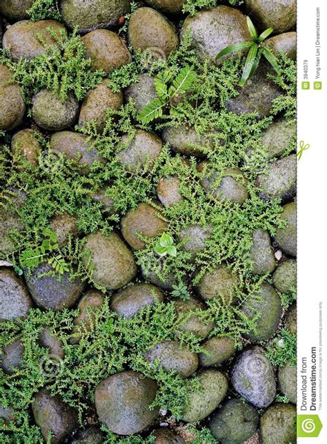 plants growing among rocks stock image image of plants