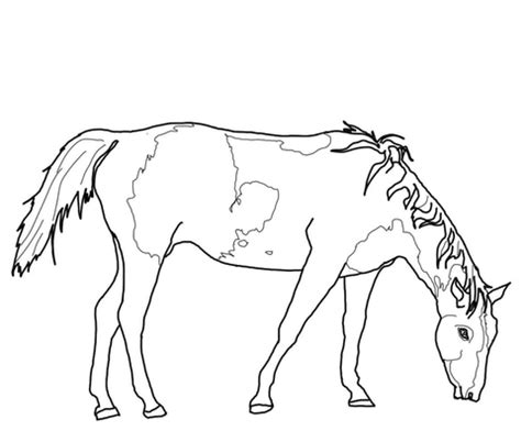 coloring pages of quarter horses paint quarter horse coloring pages coloring pages