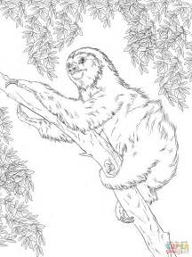 sloth coloring page two toed sloth on tree coloring page free printable