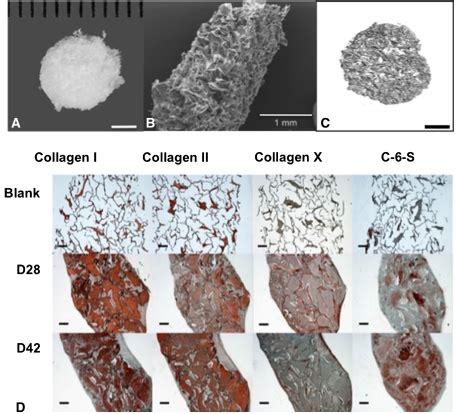 contoh biomaterial alit s practical orthopaedic sel punca dewasa multipoten