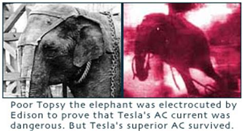 Nikola Tesla Elephant Nikola Tesla The Forgotten Genius Probably The