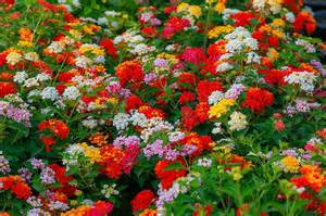 top five drought tolerant plants