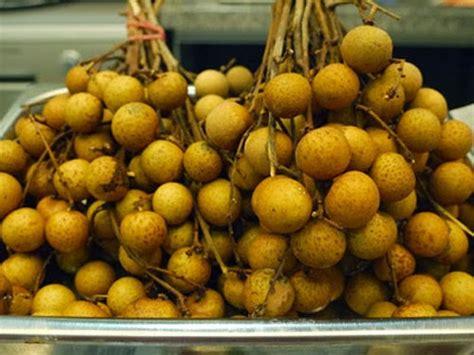 Bibit Kelengkeng Daging Tebal jual aneka buah