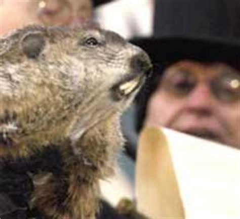 groundhog day vf marmottes fantaisies le jour de la marmotte