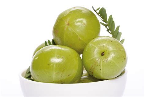 Amla Gooseberry For Hair by Medicinal Benefits Of Indian Gooseberry Ayurveda And