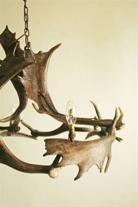 Reindeer Shed Antlers by 114 Best Images About Horns Antlers On Horns