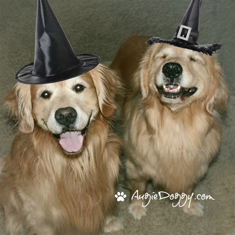 golden retriever costume for humans 1000 images about golden retrievers on its cold cheap
