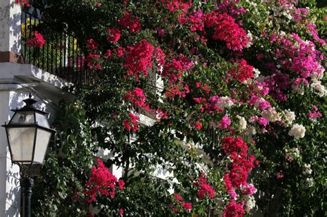 piante da terrazzo resistenti al freddo stunning piante da terrazzo resistenti al freddo