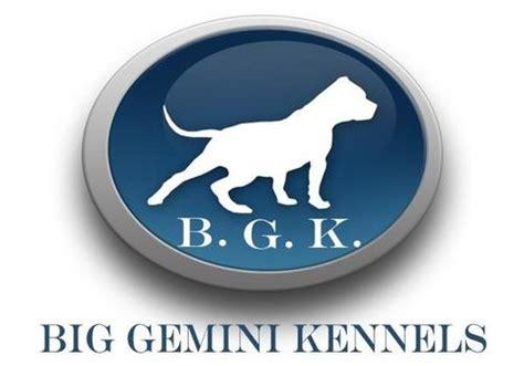 big kennels big gemini kennels biggeminikennel
