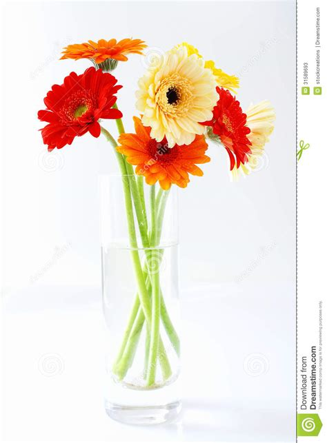 How To Arrange Gerbera Daisies In A Vase by Arrangement Of Colourful Gerbera Daisies Stock Image