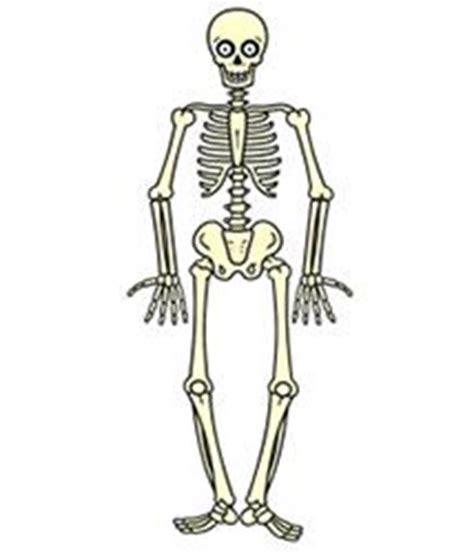 simple skeleton drawing drawing art gallery