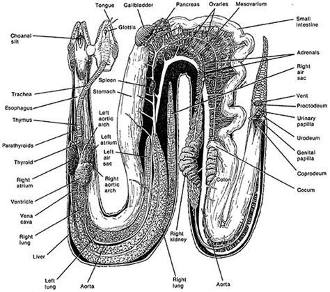 ball python heat l off at night snake anatomy