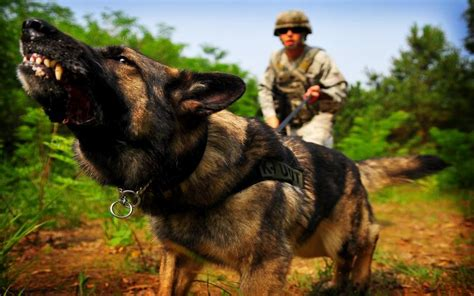 war dogs free hd war wallpaper free 113240