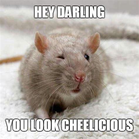 Rat Meme - rat memes