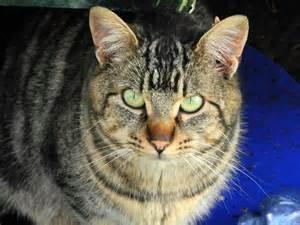 eyes full of hope the feral life cat blog