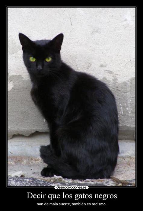 imagenes en negro de gatos usuario nekoxd desmotivaciones