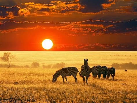7 Beautiful Photos by 48 Hd Africa Wallpapers For Desktop And Mobile