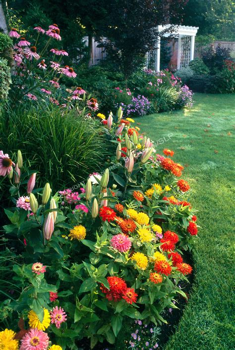 An Early Summer Border Of Mixed Annuals And Perennials Borders For Flower Gardens