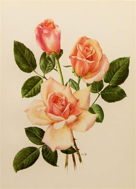 antique rose botanical garden wall art print by vintage botanical art print shabby chic home wall decor