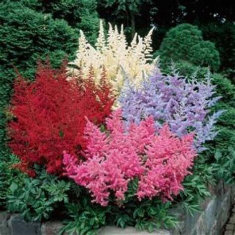 piante da giardino con fiori viola 10 piante da giardino come scegliere quelle giuste