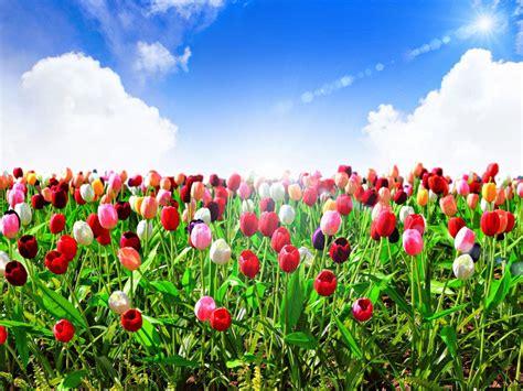 Garden Syari Best Quality hoa 苟蘯ケp h 236 nh 蘯 nh hoa 苟蘯ケp