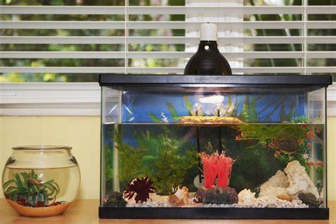 benefits of aquarium fish tanks decoration fish tank best converting from a freshwater to saltwater aquarium