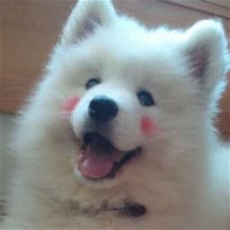 confused puppy confused puppy confused puppy